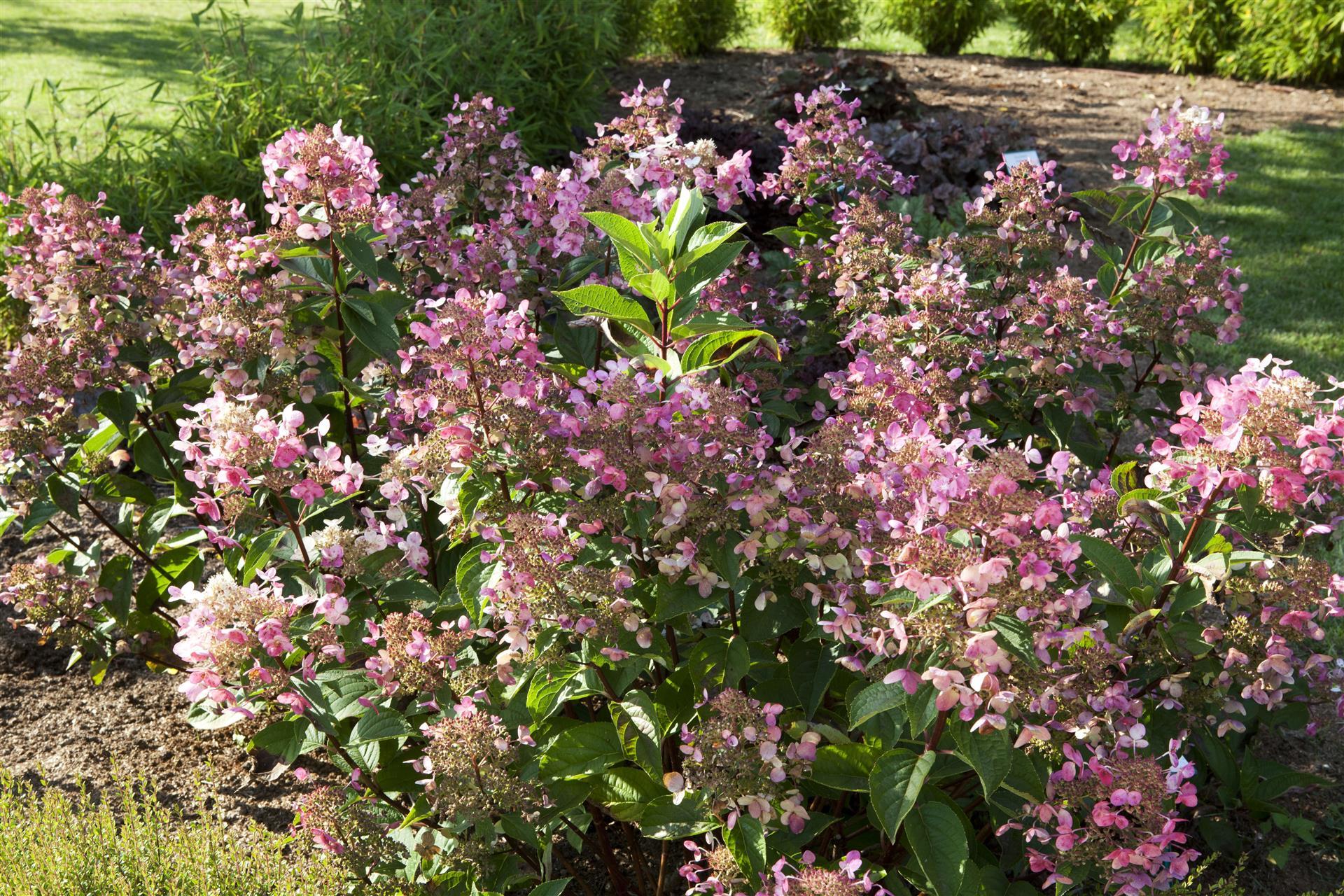 A faire au jardin en septembre - Jardin d\'ornement et plantes d ...